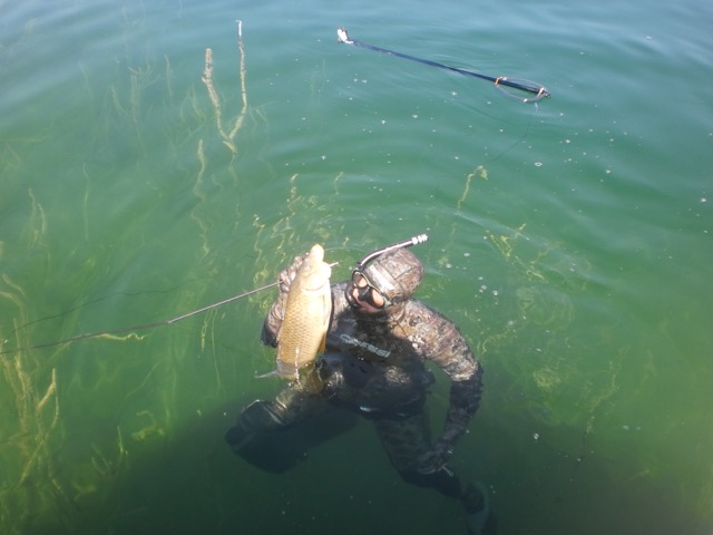 🇺🇸 Results – 1st World Freshwater Spearfishing